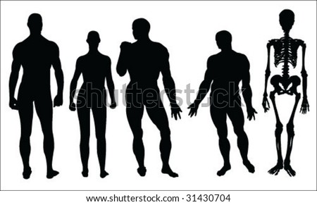 silhouettes of human body and skeleton vector collection