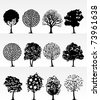 Silhouettes of trees on a white background. A vector illustration - stock vector