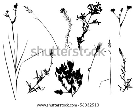 silhouettes of wild flowers