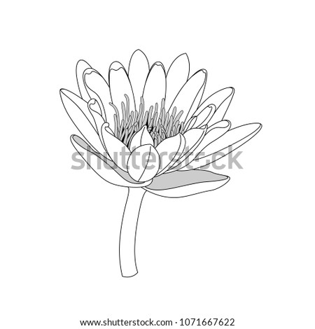 Simple line lotus flower black white stock vector royalty free simple line lotus flower black and white isolated hand draw lines and strokes mightylinksfo