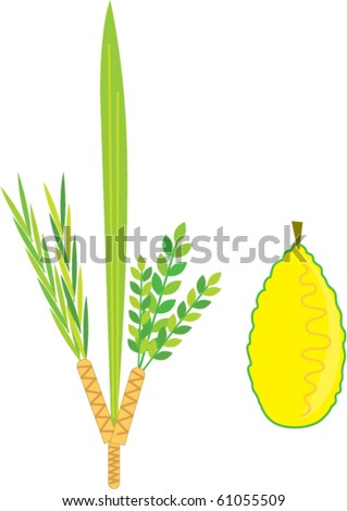 Simple Lulav and etrog - Sukkot - stock vector