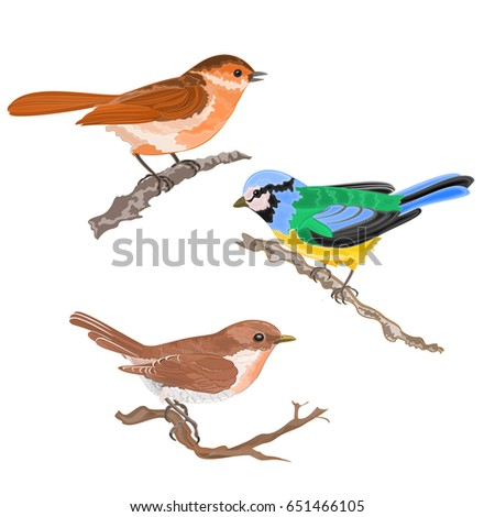 singing birds on branches warbler titmouse sparrow vintage hand draw set one vector animals illustration for