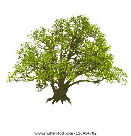 Single beautiful big oak tree isolated on a white background. Vector.