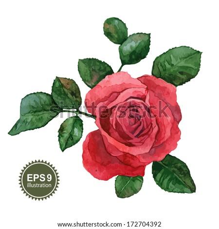 Single rose flower on a white background - stock vector