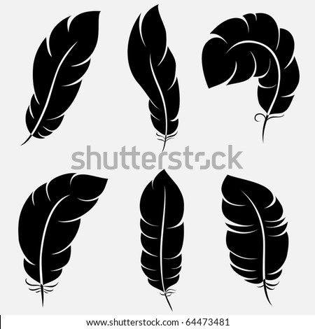 Six elegant feathers for your design and decoration - stock vector