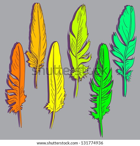 Six  feathers of parrot - stock vector