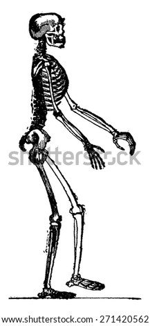 Skeleton of man, vintage engraved illustration. Earth before man 1886.