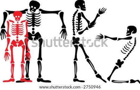 skeleton, vector - stock vector