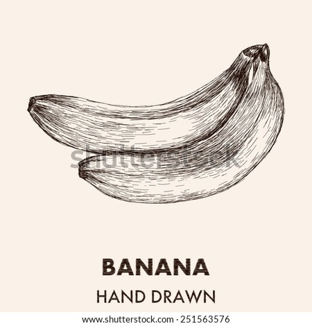 Sketch banana. Hand drawn vector illustration. Fruit collection. - stock vector