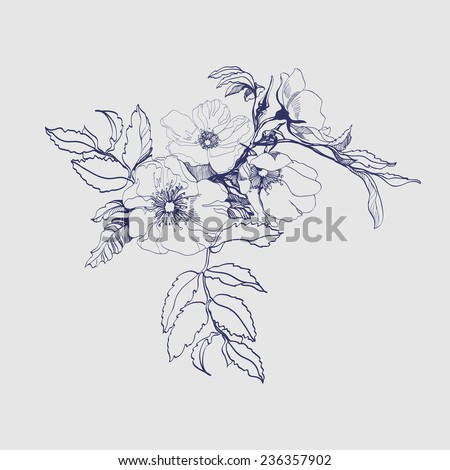 Sketch  blooming branch of wild rose. Element for your design. Vector  Illustration - stock vector