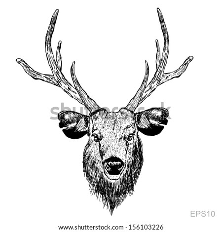 Sketch deer head on the white background - stock vector
