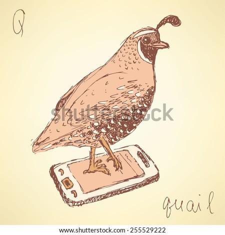 Sketch fancy quail in vintage style, vector - stock vector