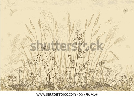 Sketch flowers of field - stock vector