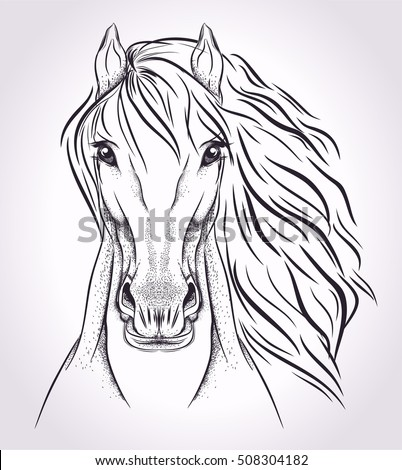 Sketch head of horse on light background