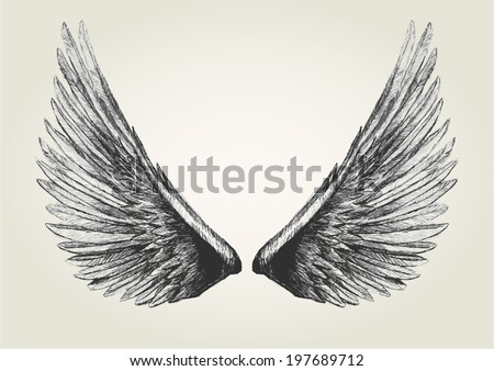 Sketch illustration of wings - stock vector
