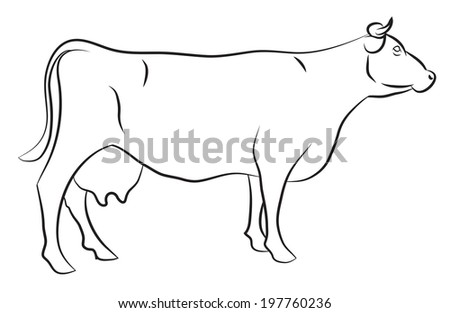 Sketch of a Cow isolated on white - stock vector