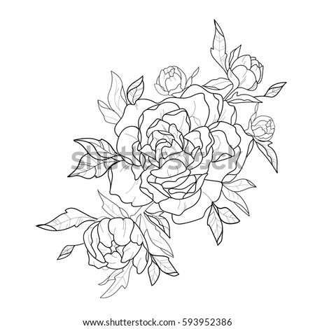 Sketch of beautiful peonies on a white background.
