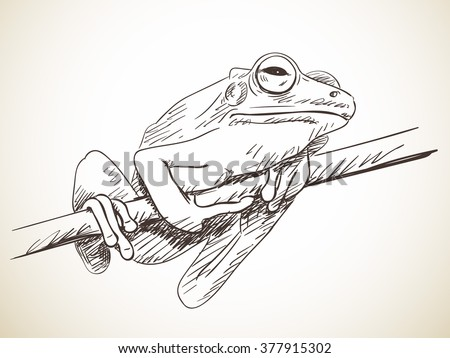 Sketch of frog, Hand drawn illustration - stock vector