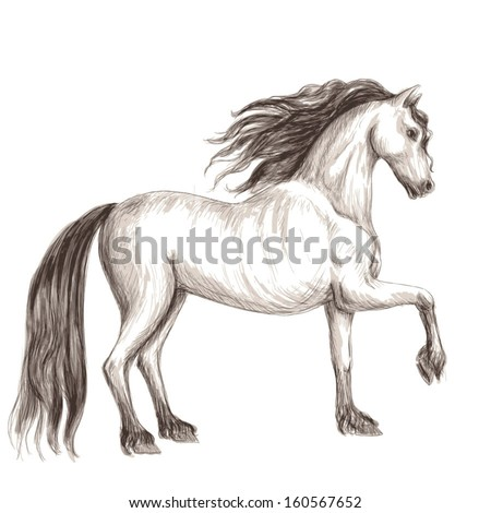 sketch of light horse with a dark mane and tail
