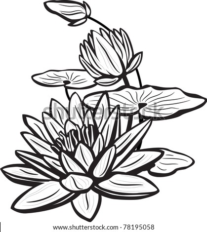 Sketch of lotus  flowers - stock vector