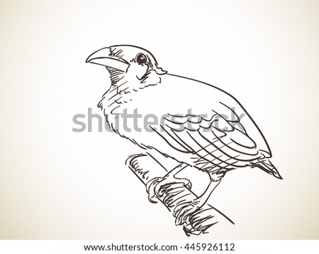 Myna Stock Vectors Images U0026 Vector Art | Shutterstock