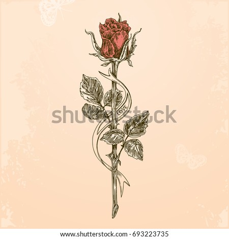 Sketch tattoo rose on long stem stock vector 693223735 for Rose with stem tattoo designs