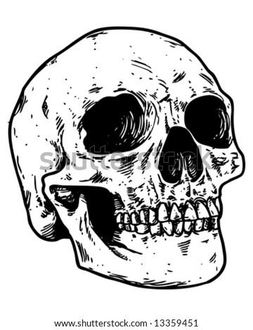 sketched skull vector - stock vector