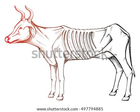 Skinny Cow Hungry Cow Sick Cows Stock Vector 497794885 ...