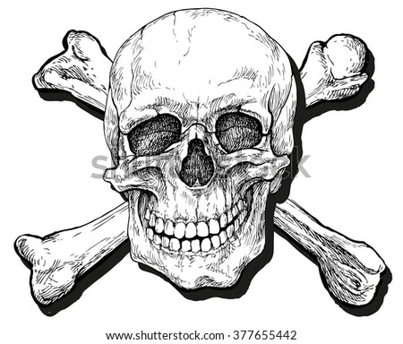 Skull and crossbones - hand drawn vector illustration, isolated on white