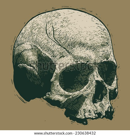 skull. engraving style. vector illustration. - stock vector