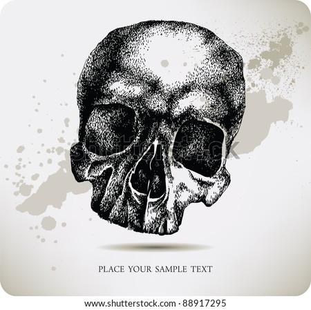 Skull hand drawing. Vector illustration. - stock vector
