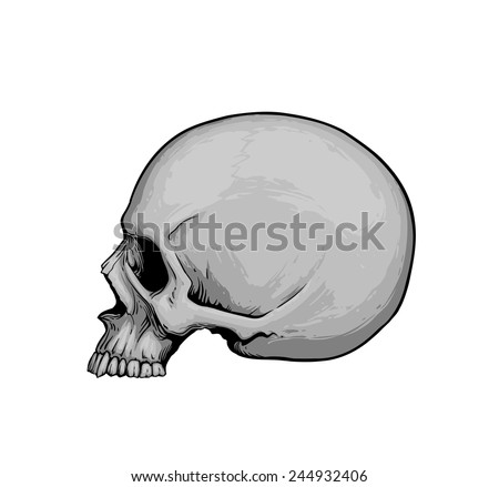 Skull in profile - stock vector