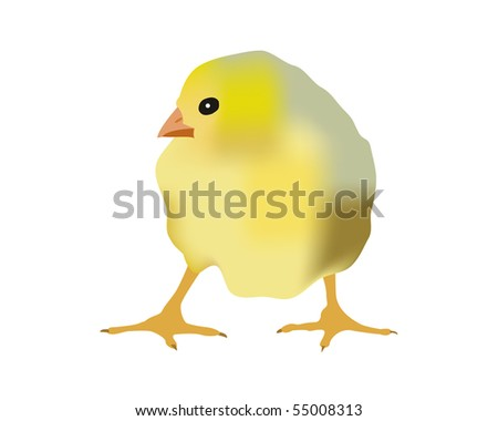 Small yellow chicken on a white background - stock vector