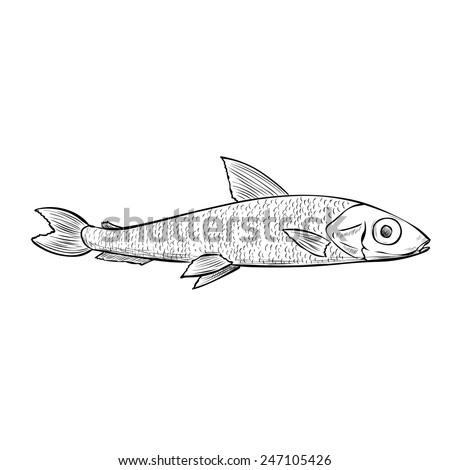 Smelt fish. Hand drawn vector illustration. - stock vector