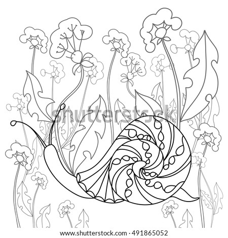 Snail On A Field Of Dandelions Black And White Illustration Free Hand Sketch For