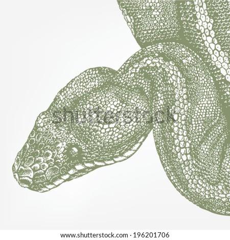 rattlesnake body parts diagram rattlesnake free engine