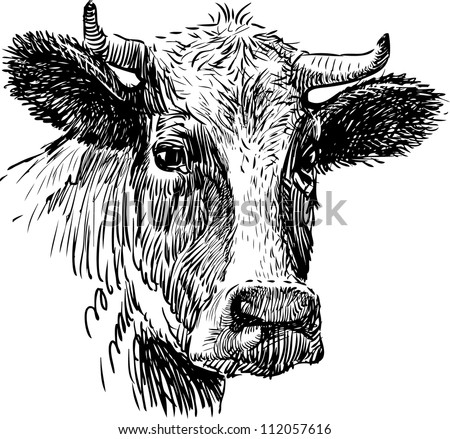 snout cow - stock vector