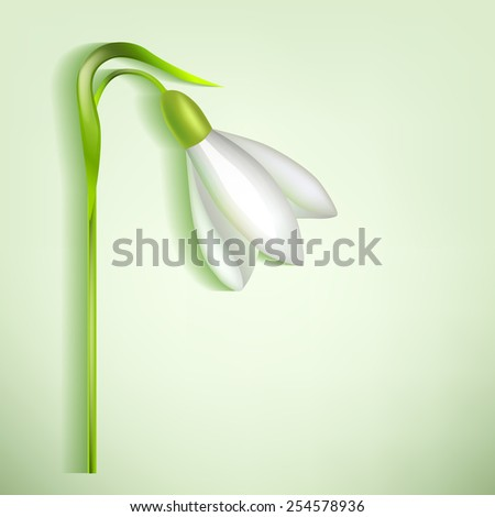 Snowdrop with a shadow on a light background