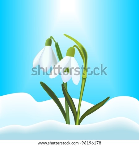 Snowdrops - stock vector