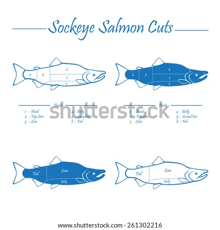 Sockeye Pacific salmon cutting diagram illustration, blue on white background - stock vector