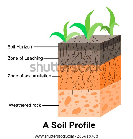 Soil formation soil horizons stock vector 285618788 for Why the soil forms layers in water