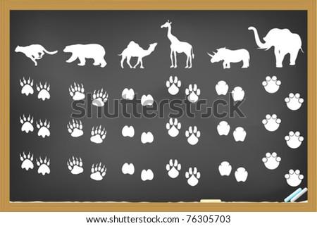 some animals footprints drawing on blackboard - stock vector