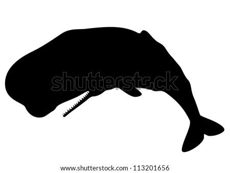 Sperm whale silhouette - stock vector