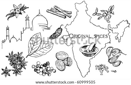 Spice collection - stock vector