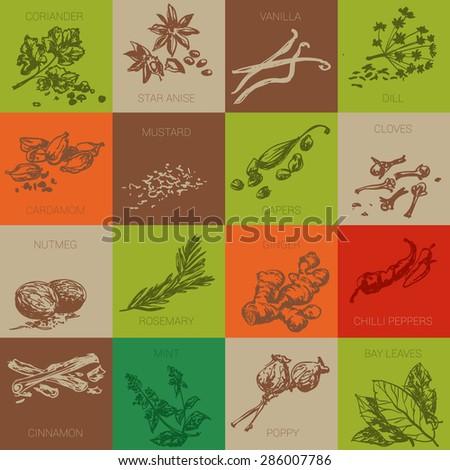 Spice hand drawn vector icon set - stock vector