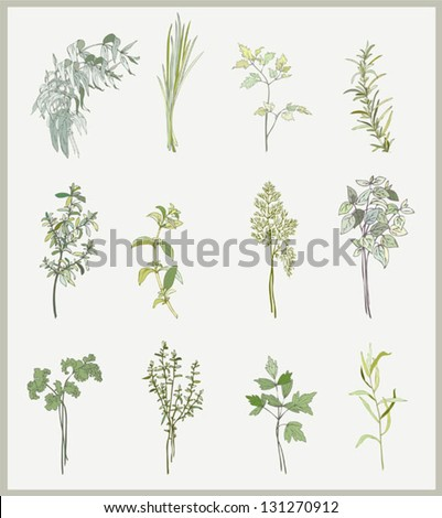 Spicy herbs. Collection of fresh herbs. Illustration spicy herbs. - stock vector