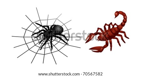 Spider and scorpion - stock vector