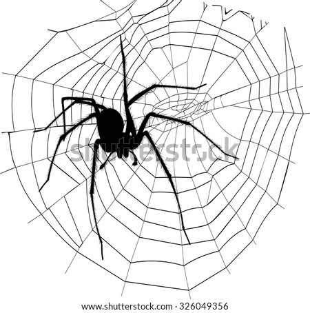 spider and spider web - stock vector