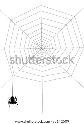 Spider on the net