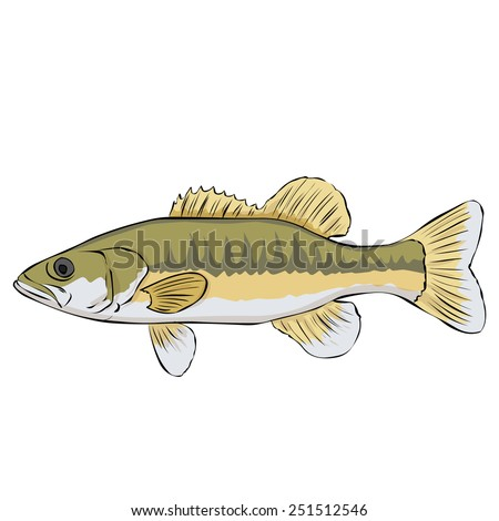 Spotted bass. Hand drawn vector illustration. Isolated on white. - stock vector